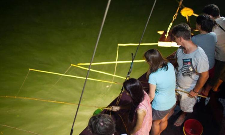 Câu mực buổi tối trên thuyền