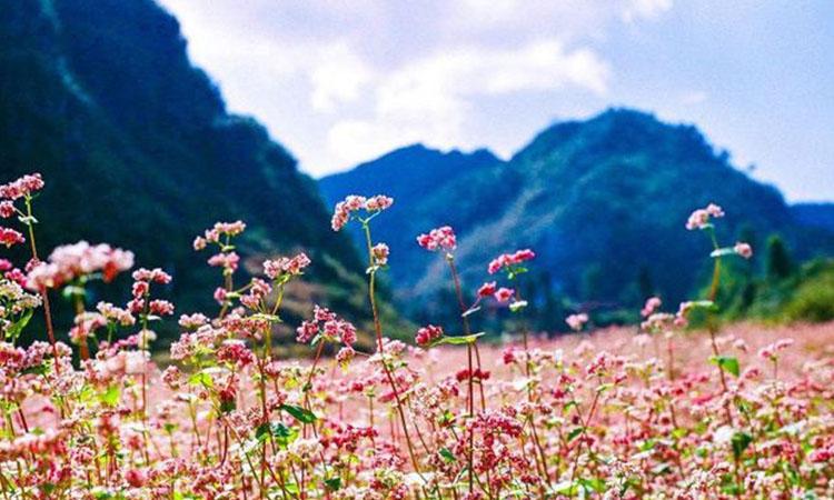 Tour du lịch Hà Giang 3 ngày 2 đêm
