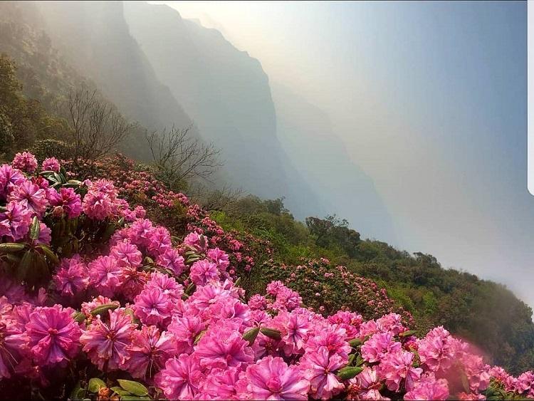 Du lịch sapa ngắm hoa Đỗ Quyên