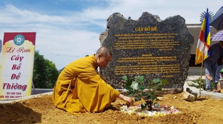 Cây bồ đề được trồng tại chùa Tam Chúc