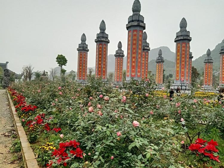 Hoa hồng tại Vườn Cột Kinh rất đẹp