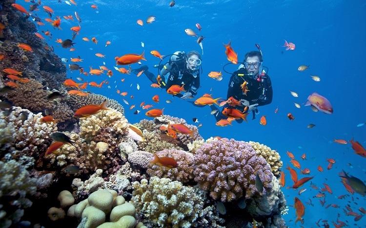Lặn biển ngắm San Hô tại đảo Phú Quốc